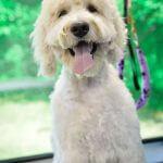 Happy Dog After Groom