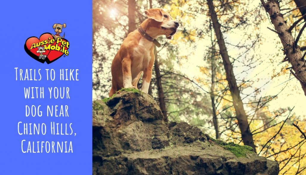 Trails to hike with your dog near Chino Hills, California